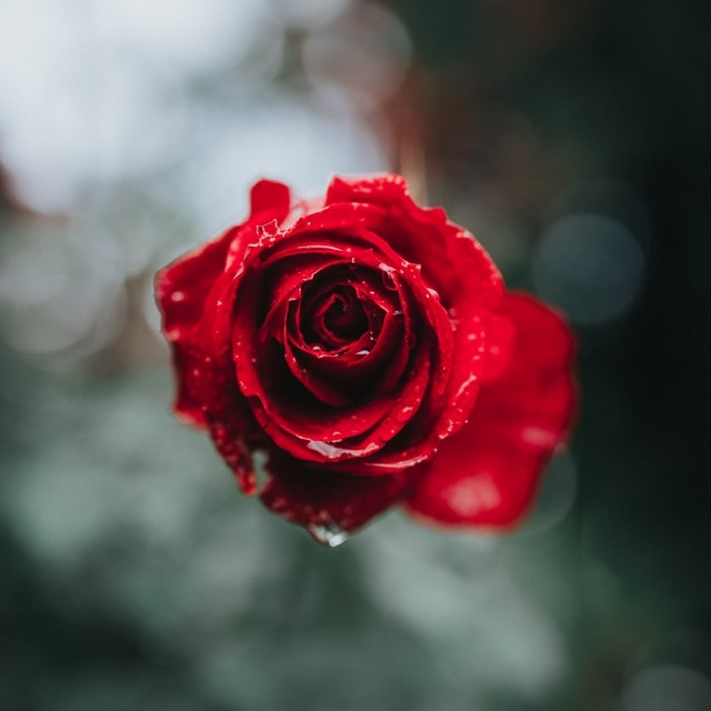 Life is a Garden of Roses